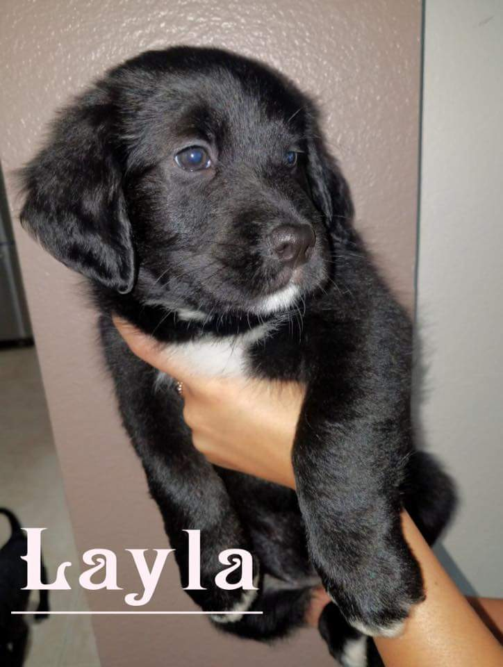 Layla-ADOPTED!