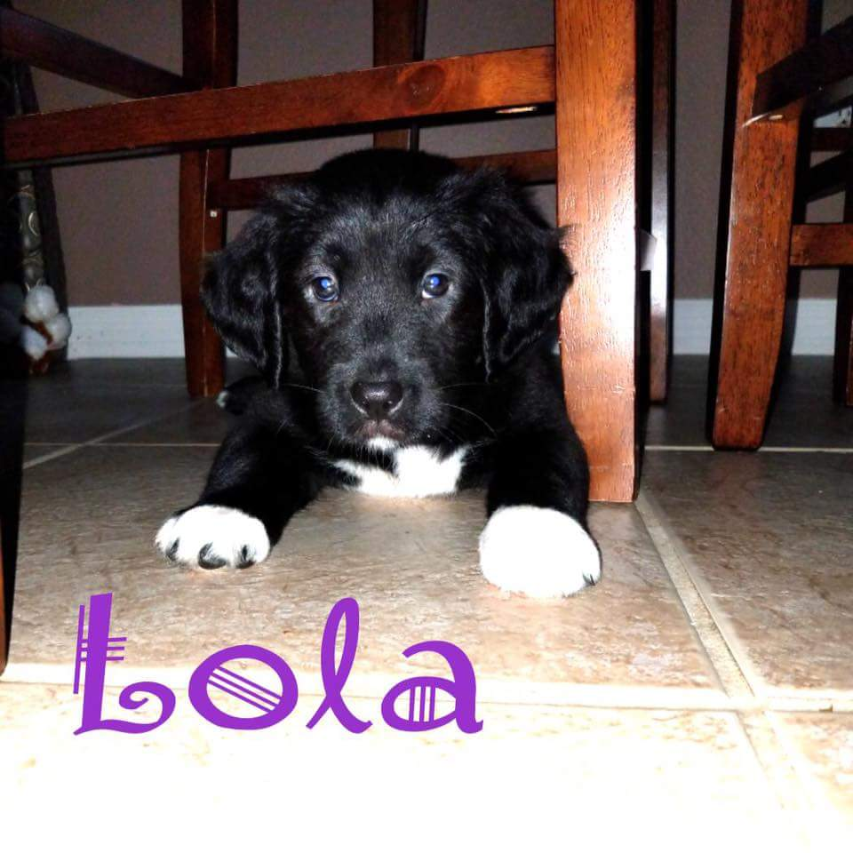 Lola-ADOPTED!