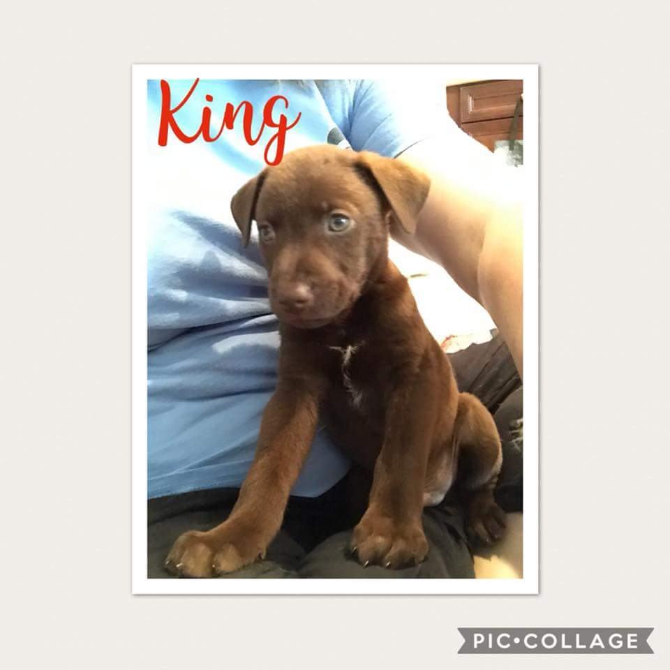 King-ADOPTED!