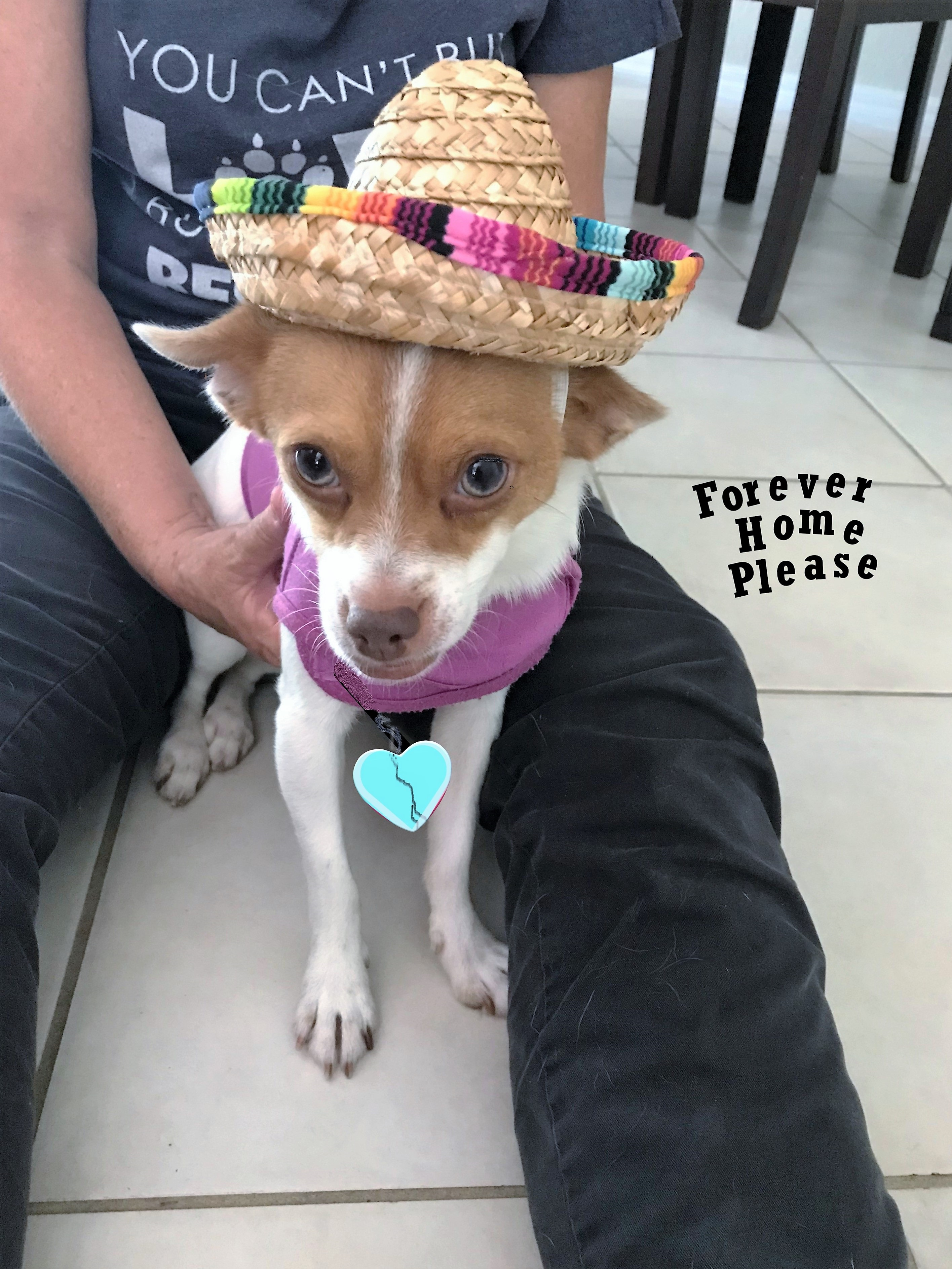Coco - ADOPTED